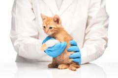 Peu de chaton de gingembre avec la jambe dans le bandage au vétérinaire Image libre de droits