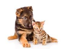 Peu de chiot de chat du Bengale et de berger allemand se trouvant ensemble D'isolement sur le fond blanc Images stock