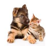 Peu de chiot de chat du Bengale et de berger allemand se trouvant ensemble D'isolement Photographie stock libre de droits