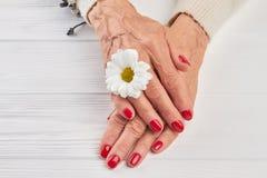 Peu de chrysanthème blanc et mains femelles Image libre de droits