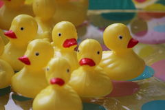 Peu de Duckies Photos libres de droits