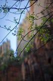 Peu de feuilles sur la branche Photo libre de droits