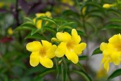 Peu de fleur Photographie stock libre de droits