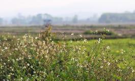 Peu de fleur avec le landspace de nature et le copyspace, FO sélectives image stock