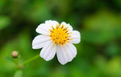 Peu de fleur blanche Image stock