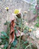 Peu de fleur d'herbe au vieux bâtiment de conner, Hadyai, Thaïlande Image libre de droits