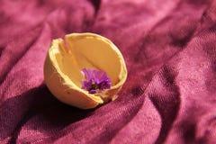 Peu de fleur dans la coquille illuminée par la lumière du soleil sur le pourpre Photo stock