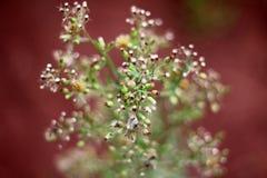 Peu de fleur dans la forêt Photos stock