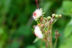Peu de fleur dans la forêt Image libre de droits