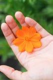 Peu de fleur dans ma main Photos libres de droits
