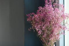 Peu de fleur et copyspace roses, lumière de fenêtre F sélectif photos libres de droits