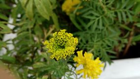 Peu de fleur jaune images stock