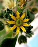 Peu de fleur jaune Images libres de droits