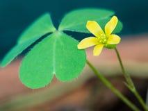 Peu de fleur non désirée jaune Photos libres de droits