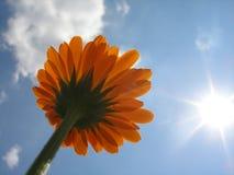 Peu de fleur sur le ciel Photos stock