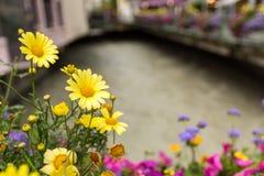 Peu de fleurs à Chamonix Image libre de droits