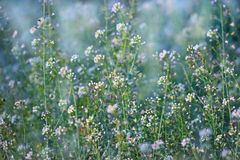 Peu de fleurs sauvages blanches de pré Images libres de droits