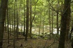 Peu de fleuve par des arbres image libre de droits