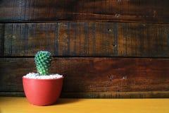 Peu de fond en bois de cactus avec l'espace pour le texte Photographie stock