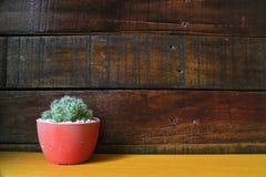 Peu de fond en bois de cactus avec l'espace pour le texte Image stock