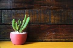 Peu de fond en bois de cactus avec l'espace pour le texte Photos libres de droits