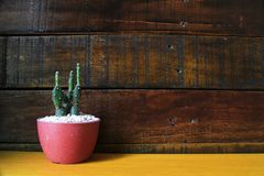 Peu de fond en bois de cactus avec l'espace pour le texte Photographie stock libre de droits