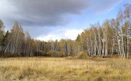 Peu de forêt Photos libres de droits