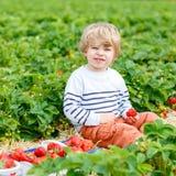 Peu de fraises de cueillette de garçon d'enfant à la ferme, dehors Photographie stock libre de droits