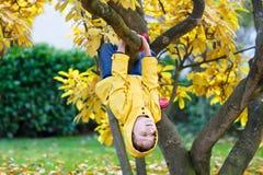Peu de garçon d'enfant dans des vêtements colorés appréciant s'élever sur l'arbre dessus photos stock