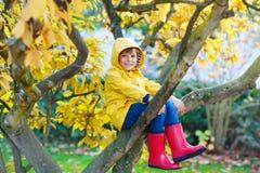 Peu de garçon d'enfant dans des vêtements colorés appréciant s'élever sur l'arbre le jour d'automne photographie stock libre de droits