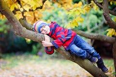Peu de garçon d'enfant dans des vêtements colorés appréciant s'élever sur l'arbre le jour d'automne Photos stock
