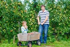 Peu de garçon et père d'enfant sélectionnant les pommes rouges l'automne de ferme Images libres de droits