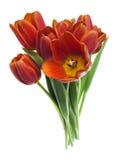 Peu de groupe de tulipes rouges Images stock