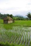 Peu de hutte dans les ricefields photographie stock libre de droits