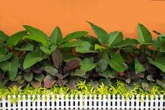 Peu de jardin et devant le mur Photo stock