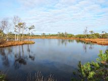 Peu de lac et beaux arbres dans le marais, Lithuanie Photo libre de droits