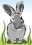 Peu de lapin dans l'herbe Images stock