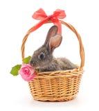 Peu de lapin dans un panier avec une rose Image libre de droits