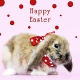 Peu de lapin de Pâques Photo libre de droits