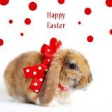 Peu de lapin de Pâques Photo stock