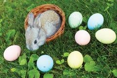 Peu de lapin de Pâques se reposant dans un panier en osier avec des oeufs Image libre de droits