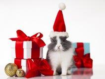 Peu de lapin, lapin drôle sur le fond de Noël photographie stock libre de droits