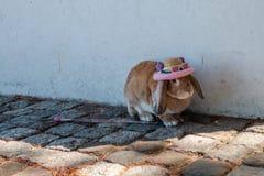 Peu de lapin utilisant les verres et le chapeau mignons sur le plancher de ciment avec images stock