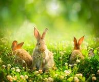 Peu de lapins de Pâques Images libres de droits