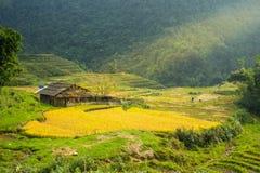 Peu de maison dans le domaine de riz Photo stock