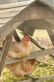Peu de maison pour des poulets image libre de droits