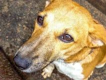 Peu de modèle de chien photographie stock libre de droits