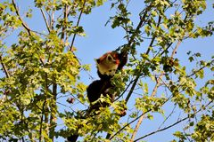 Peu de panda Photos libres de droits