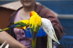 Peu de perroquets de couleur Photo stock