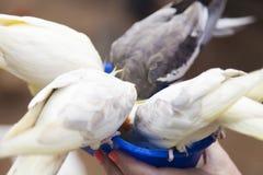 Peu de perroquets de couleur Photos stock